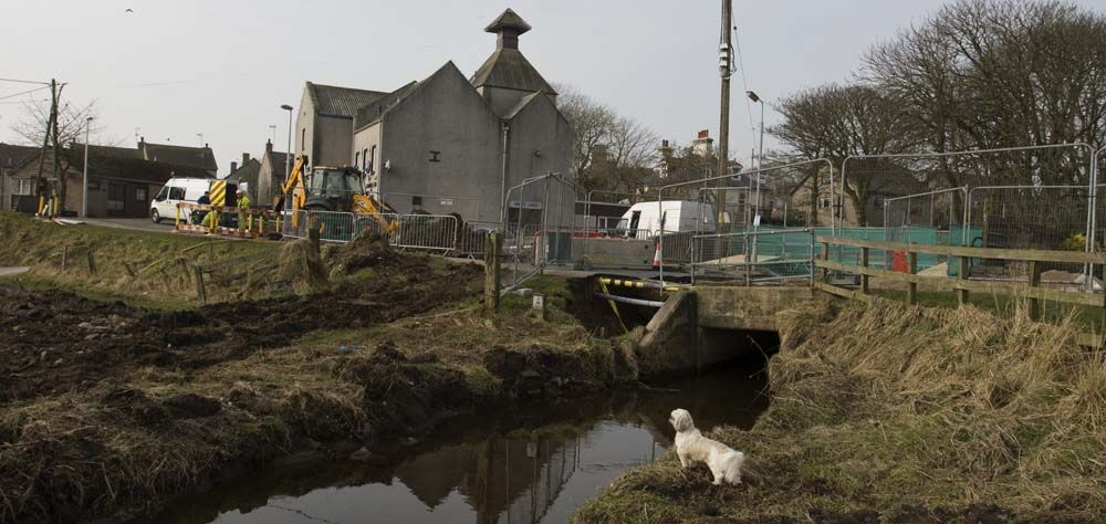 Lily the dog admires the work starting to replace the bridge