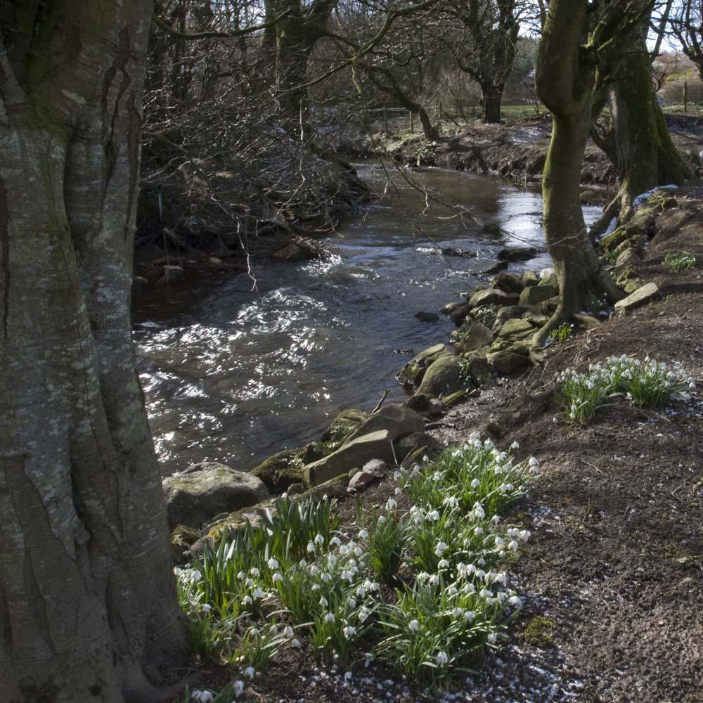 In the garden of Burnbank, Hatton
