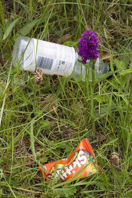 An orchid shares space with the all pervasive litter.