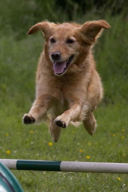 Dogs do smile!