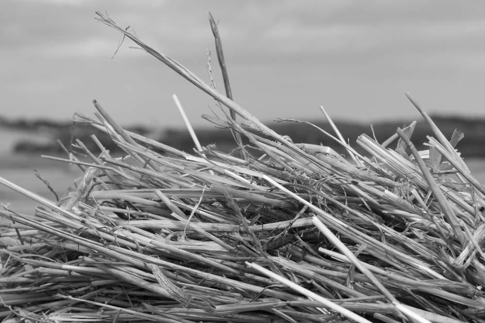 Straw View