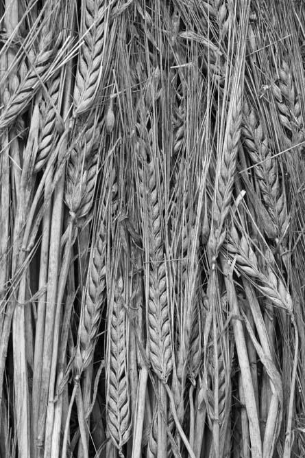 Harvest Tracks 2