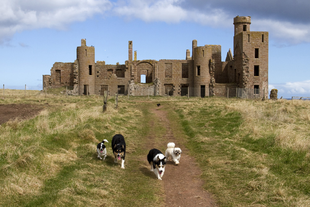 The dogs leave the castle.