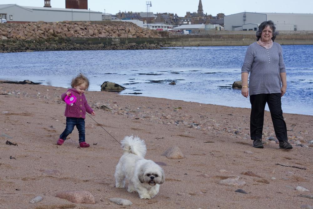 A beach and agile dogs