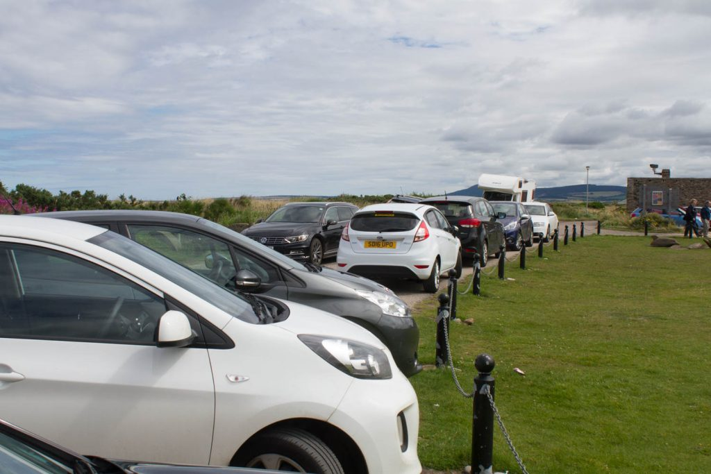 Traffic jam at Spey Bay